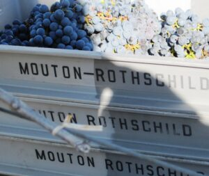 Mouton Grapes 300x253 Chateau Mouton Rothschild Pauillac Bordeaux Wine