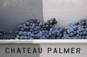 Palmer Grapes basket 300x197 Chateau Palmer Margaux Bordeaux Wine
