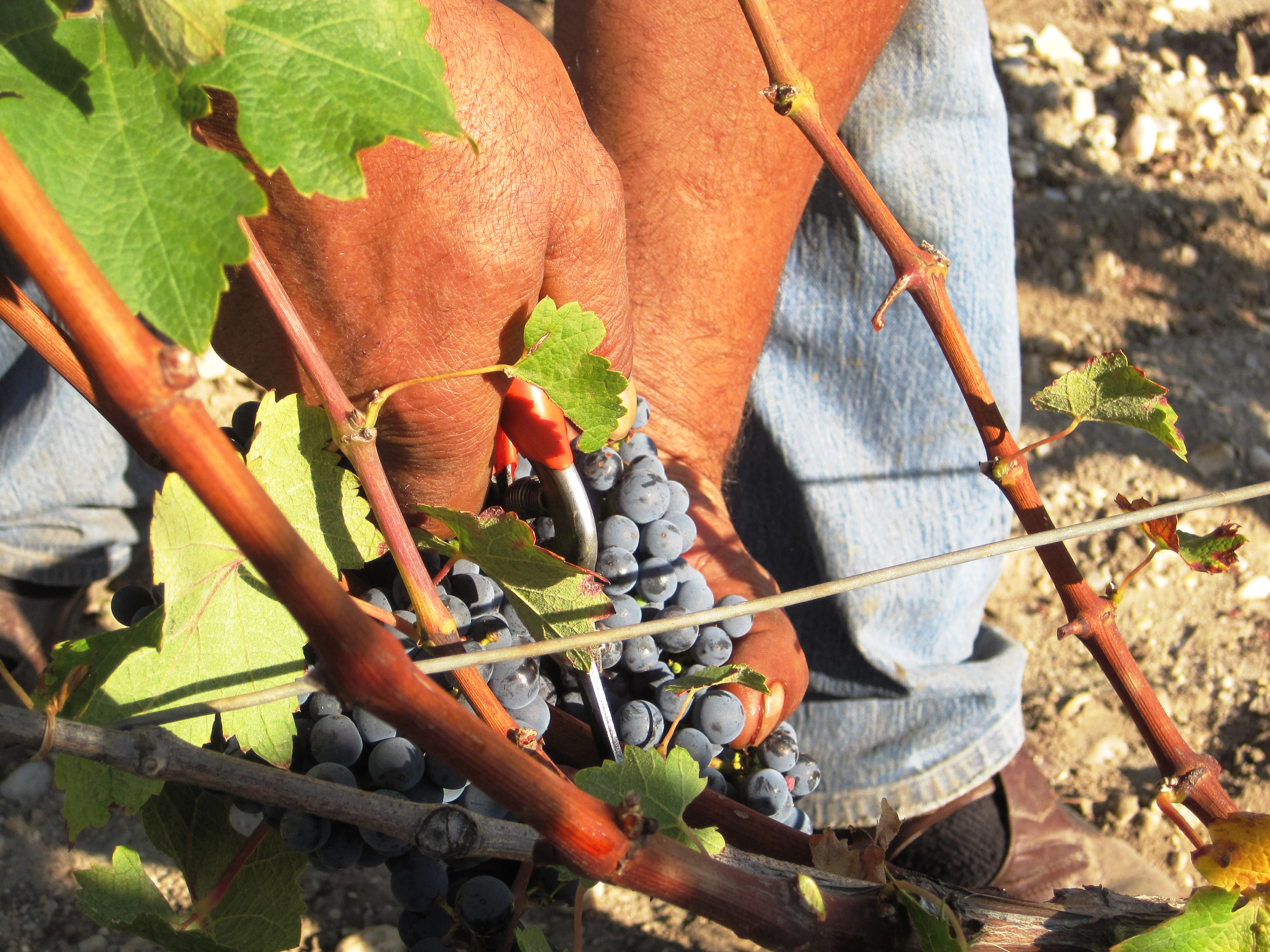 2010 Mouton Rothschild Rothschild Harvest 1