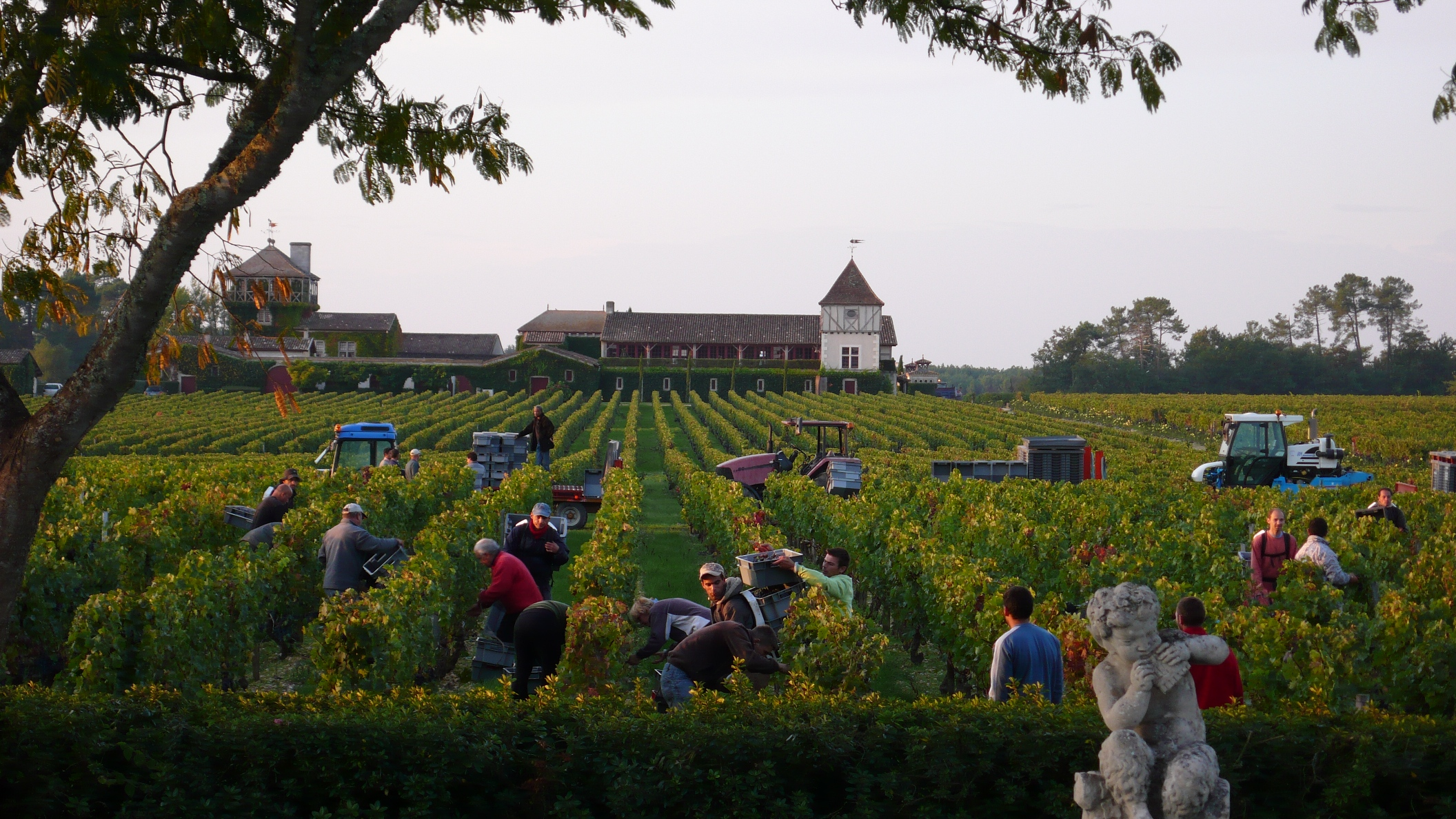 Smith Haut Lafitte Harvest