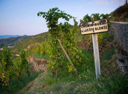Cote Rotie Appellation Cote Rotie Everything you want to know, the Complete Rhone Wine Guide