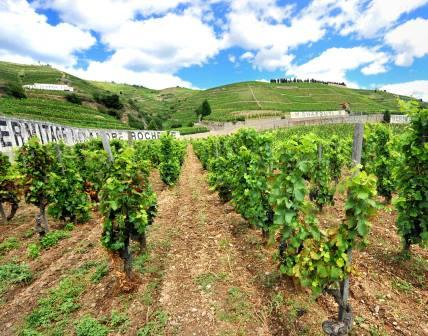 Hill of Hermitage Complete Guide to the Northern Rhone Wines, Wineries, Producers