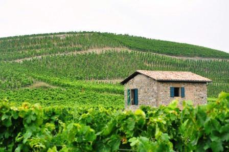 NORTHERN RHONE VINEYARDS Rhone Wine Guide Everything you need to know about Hermitage Wine