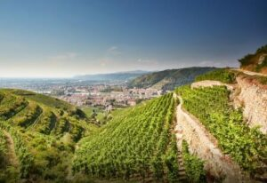 Northern Rhone 300x206 Rhone Wine Guide Everything you need to know about Hermitage Wine