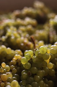 Hagen Chardonnay grapes 2 199x300 Clos Pepes Wes Hagen Straight Talk on California Chardonnay