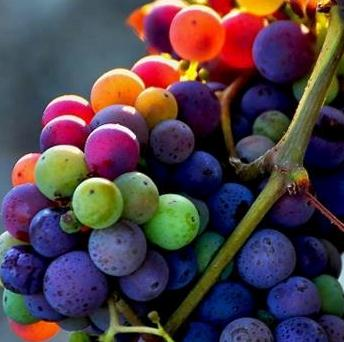 Grapes colors Grapes