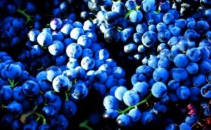 Grenache 300x186 Grenache Wine Grapes, Flavor, Character History Wine Food Pairing Tips
