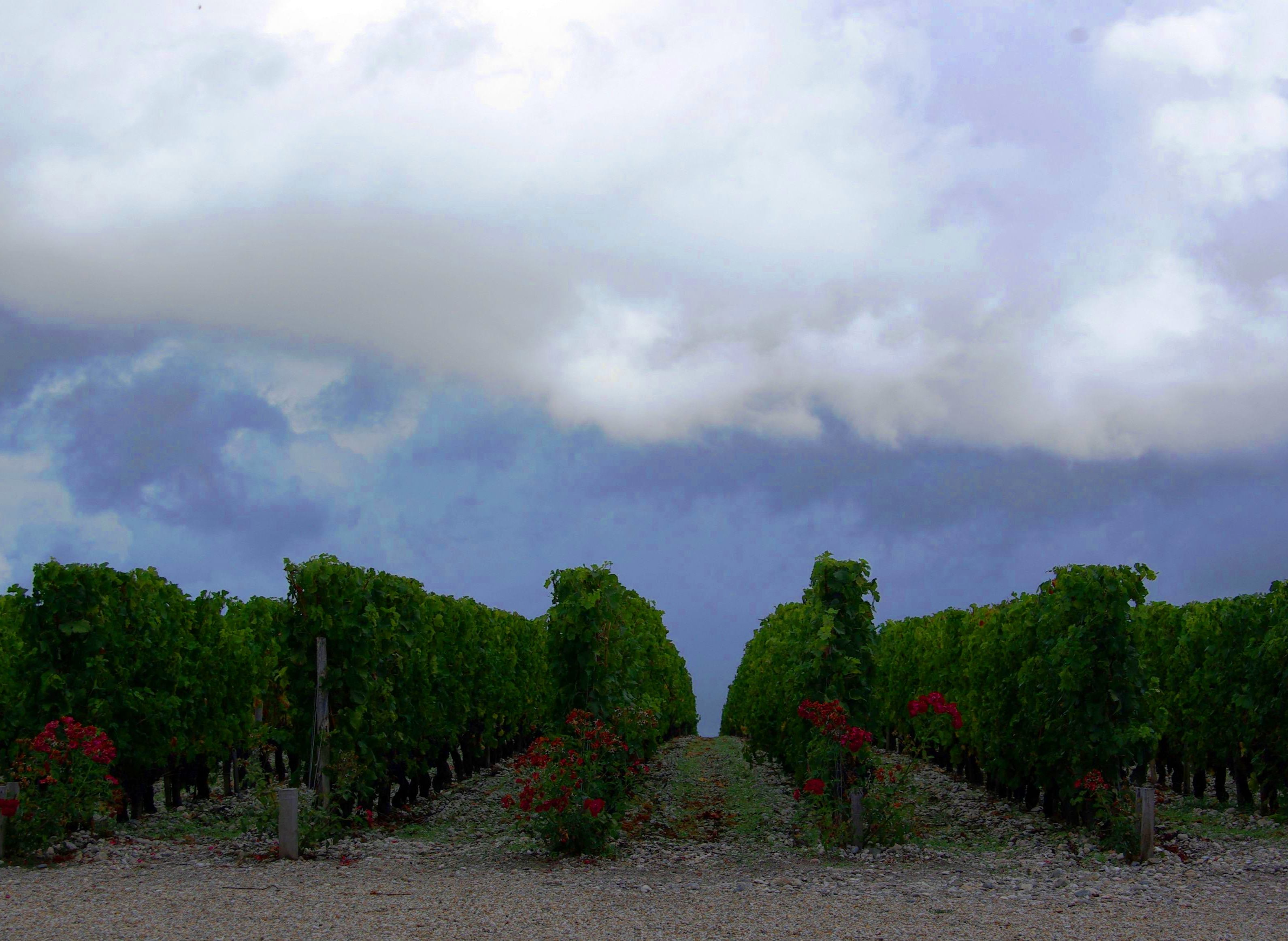 2011 Bordeaux Harvest Storm