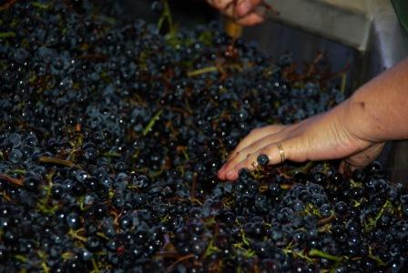 2011 Clerc Milon Harvest