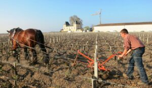 Margaux horse 300x175 2011 Chateau Margaux Tasting Notes, Paul Pontallier Interview