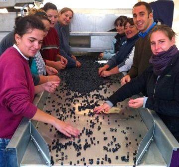 2012 ClosDubreuil harvest