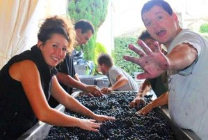 2012 Grand Puy Ducasse Harvest Sorting 300x203 2012 Bordeaux Vintage Grand Puy Ducasse Thierry Budin on the Vintage