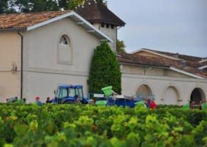 Pichon Lalande Harvest 300x213 2012 Pichon Lalande Harvest Report A Wine Makers Vintage in Pauillac
