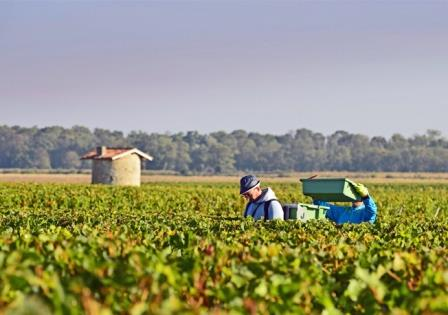 2012 Bordeaux Harvest Information Vintage Summary