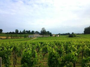 Bordeaux in the vines 300x225 Bordeaux Value Wine Guide to Smaller Lesser Known Chateaux, Vineyards