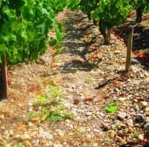 Bordeaux Gravel Terroir Soil 300x296 Dirty Little Secret about the Soil, Terroir and Climate of Bordeaux