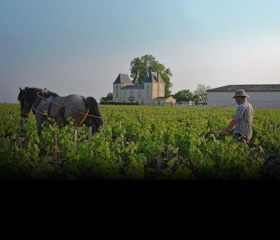 2014 Margaux Tasting Notes, Ratings, Reviews and Vintage Report