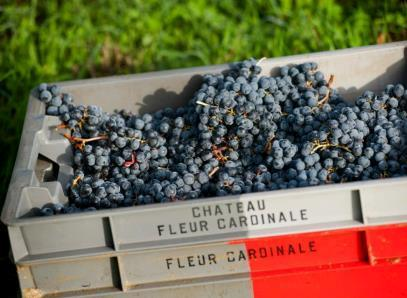 Wine of the Week 2005 Fleur Cardinale St. Emilion